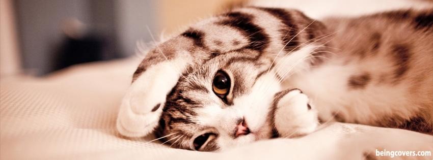 Cute Kitten Cover
