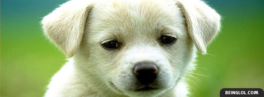 Cute puppy Cover