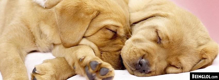 Dogs Cuddling Facebook Cover