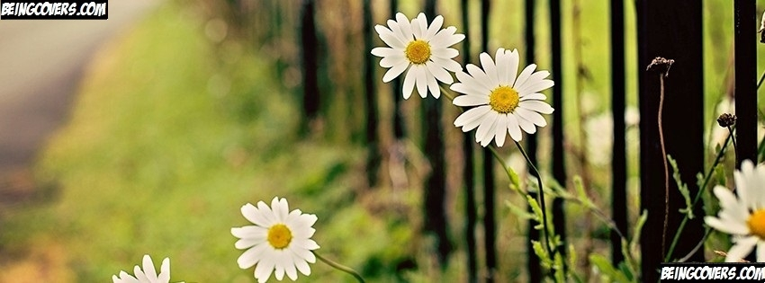 Flowers Chamomile Fence Facebook Cover