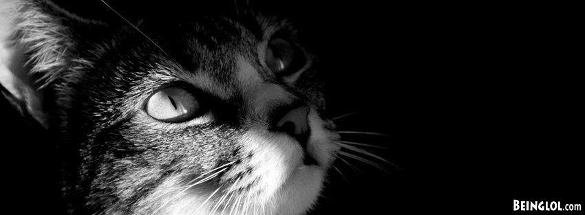 Kitty Looking Up  Facebook Cover