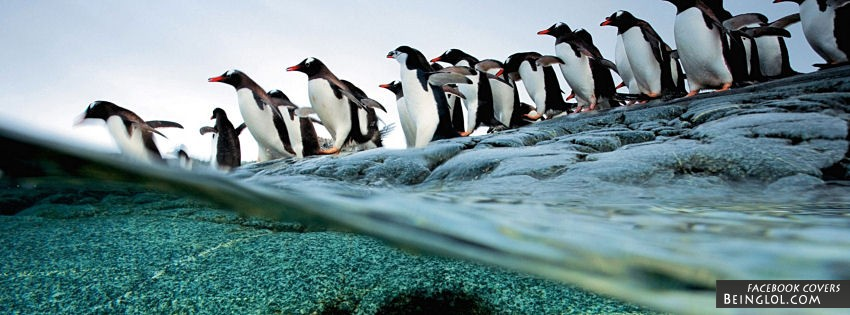 Penguins Diving Cover
