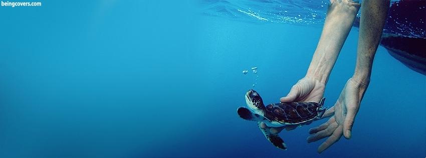 Sea Turtle Cover