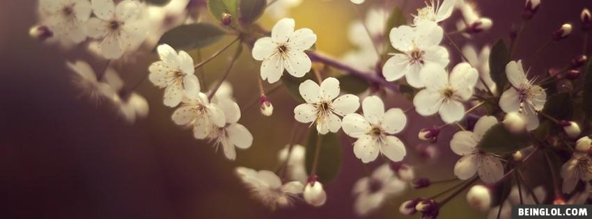 Springtime Flowers Cover